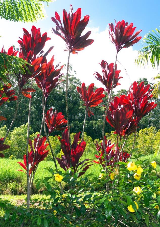 Plantas decorativas en maui foto de archivo imagen de for Plantas decorativas