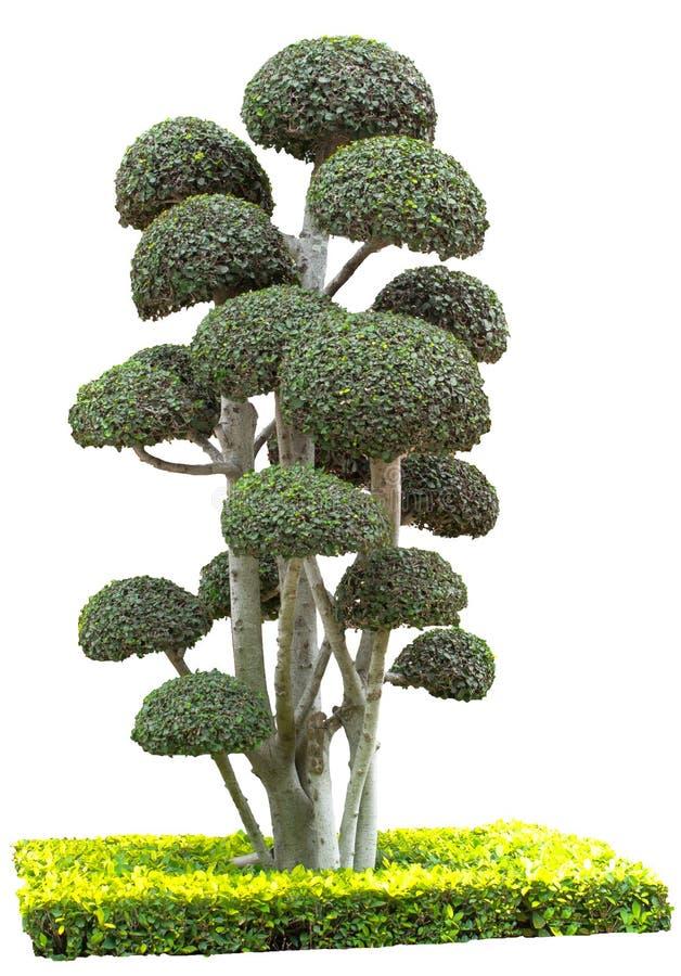 Plantas decorativas isoladas no fundo branco fotografia de stock