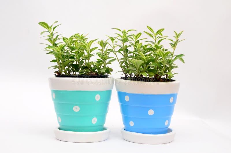 Plantas decorativas no vaso com espaço da cópia para o texto imagens de stock