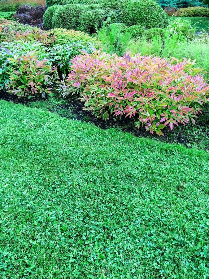 Plantas Decorativas Exterior Trendy Los Muros Verdes