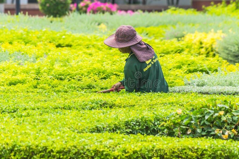 Plantas del ajuste del jardinero imagen de archivo libre de regalías