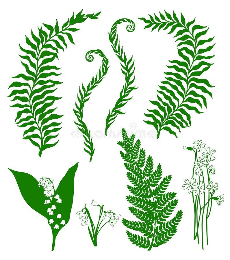 Plantas del bosque ilustración del vector