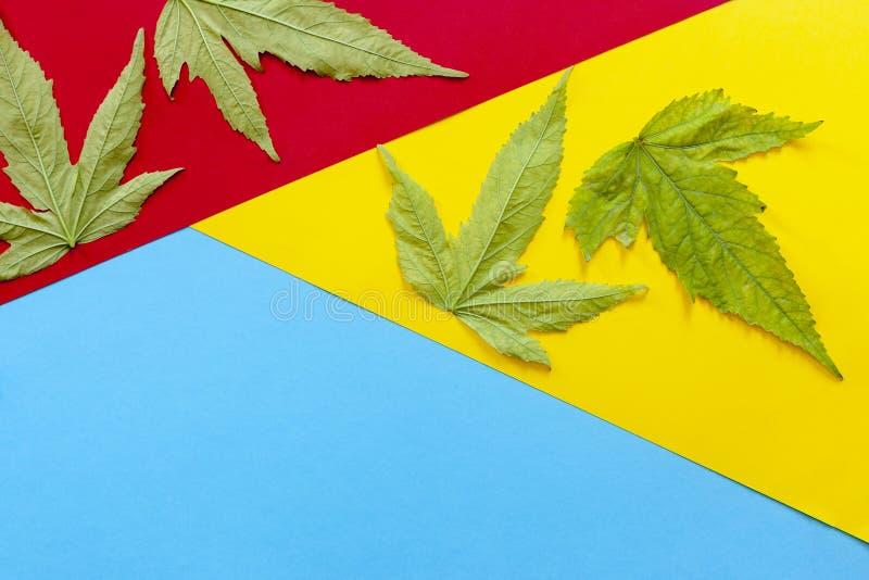 Plantas del cáñamo, hojas de la mala hierba en diverso fondo de papel coloreado fotos de archivo libres de regalías