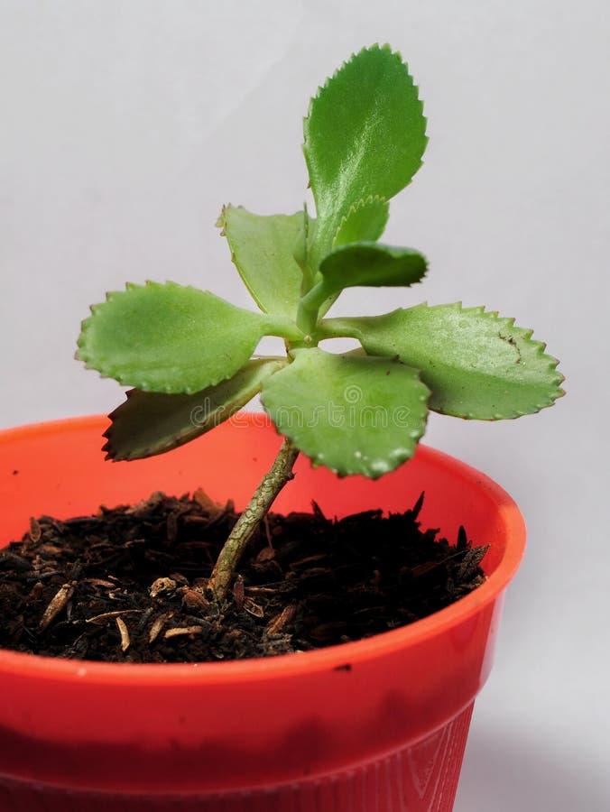 Plantas del cactus en los potes aislados en el fondo blanco imágenes de archivo libres de regalías