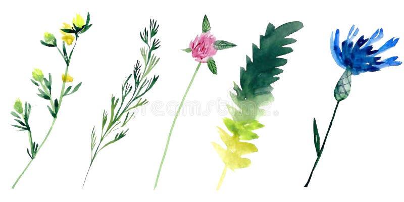 Plantas del campo del Watercolour fotos de archivo libres de regalías