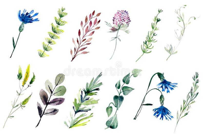 Plantas del campo del Watercolour imagen de archivo libre de regalías