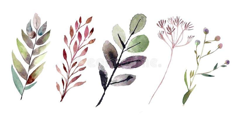 Plantas del campo del Watercolour foto de archivo