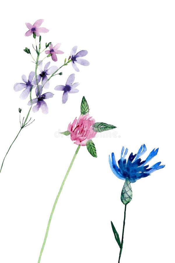 Plantas del campo del Watercolour imagen de archivo