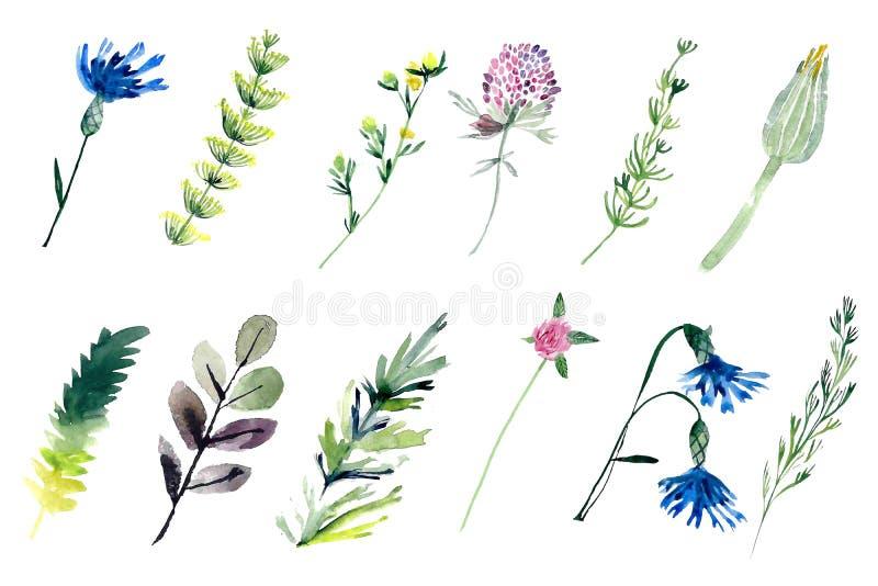 Plantas del campo del Watercolour ilustración del vector