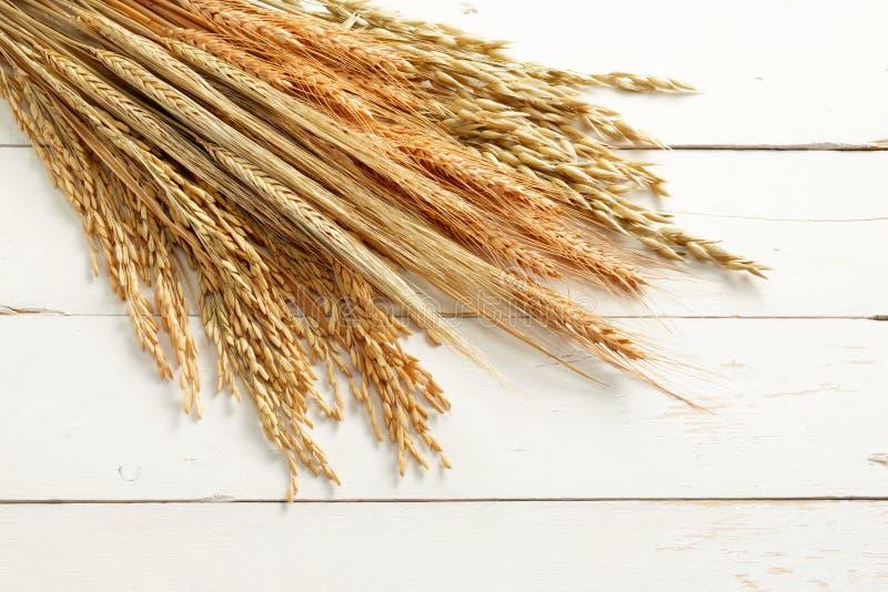 Plantas del cereal imagen de archivo