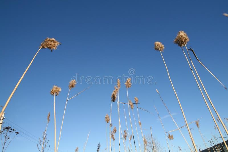 Plantas del cielo imagen de archivo libre de regalías