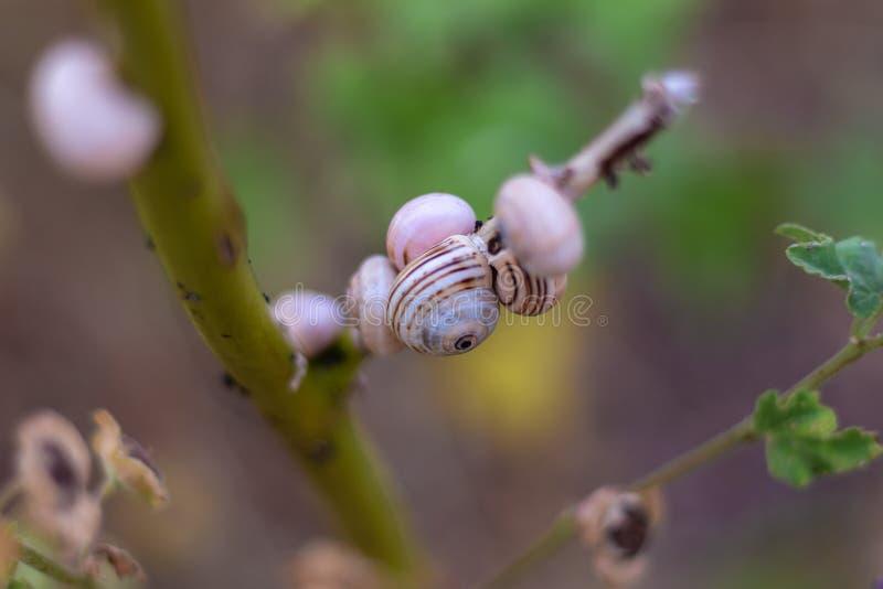 Plantas del macrophoto de la naturaleza de los manysnails de los insectos del caracol foto de archivo
