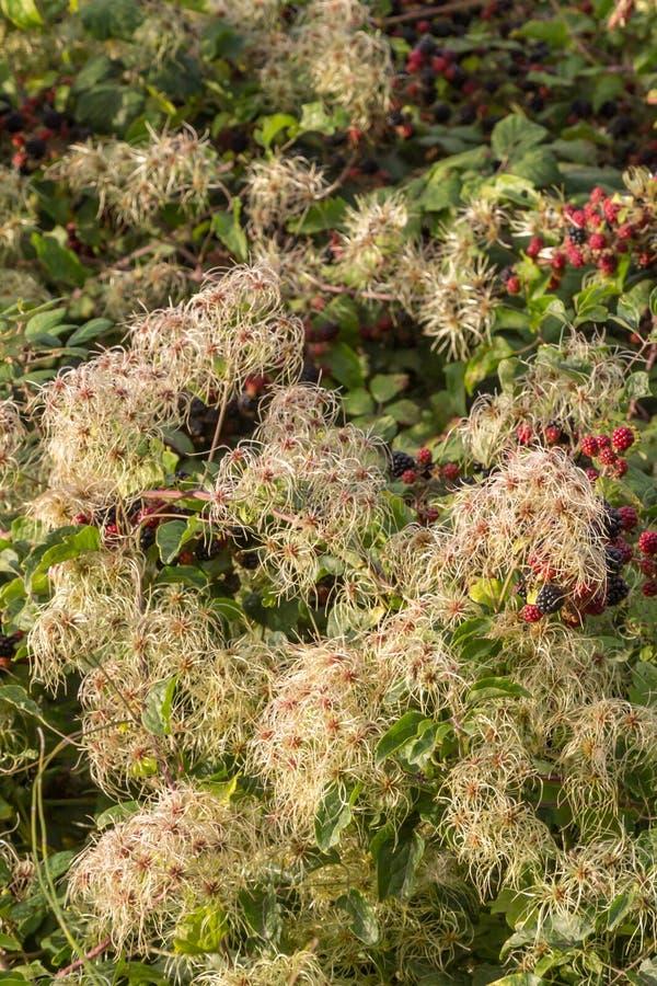 Plantas del otoño imagen de archivo libre de regalías