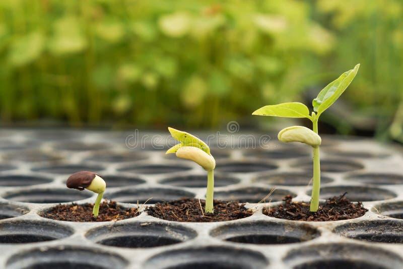 Plantas do bebê imagens de stock royalty free