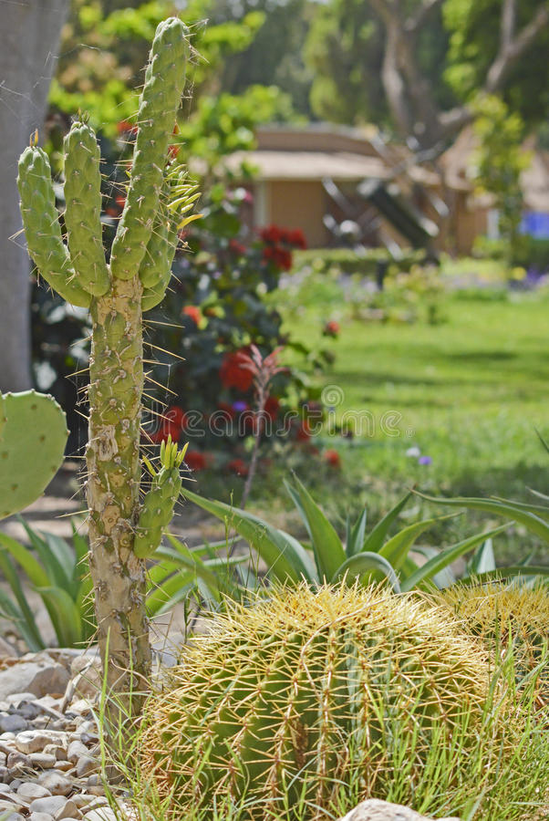 Plantas do cacto em um jardim árido do deserto imagem de stock royalty free