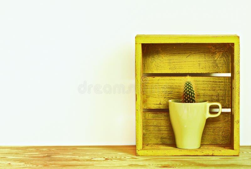 Plantas do cacto no estilo do vintage do vaso de flores fotografia de stock