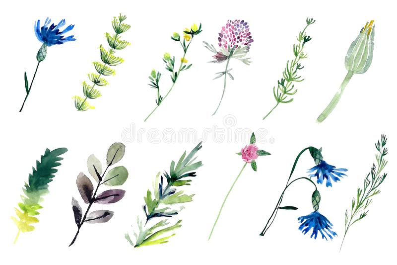 Plantas do campo do Watercolour ilustração do vetor