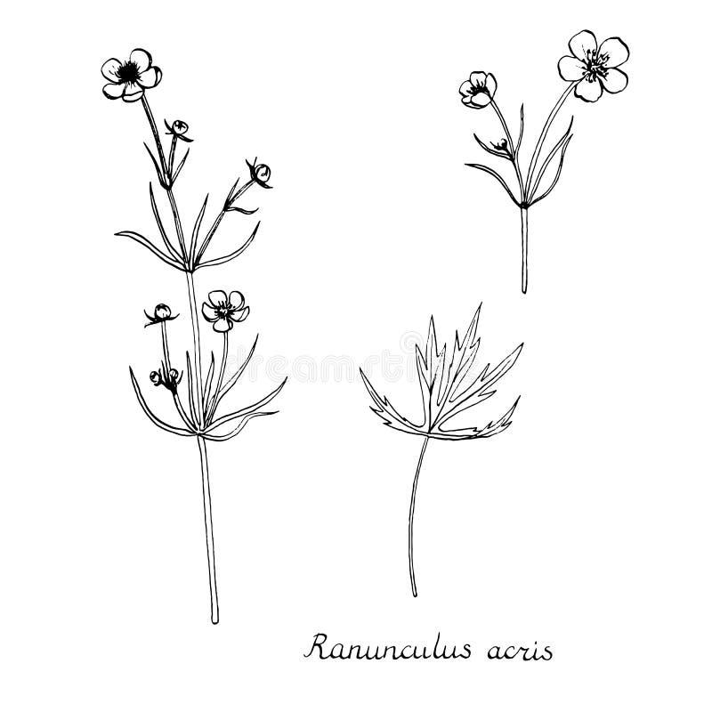 Plantas do desenho da tinta do vetor ilustração royalty free