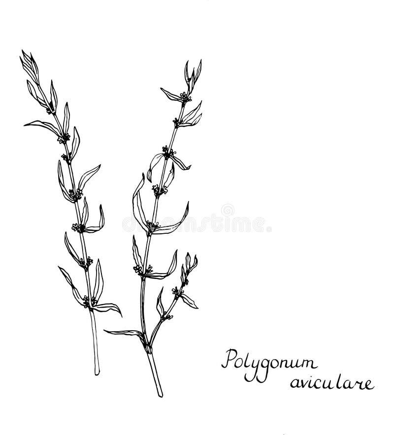 Plantas do desenho da tinta do vetor ilustração do vetor
