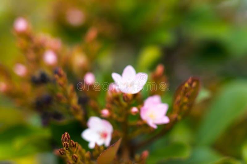 Plantas do estilo japonês no jardim fotos de stock royalty free