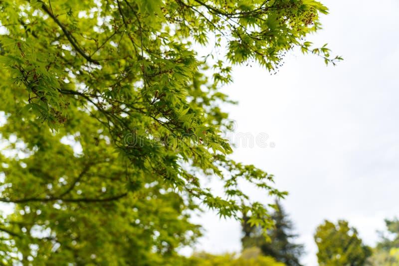 Plantas do estilo japon?s no jardim imagens de stock