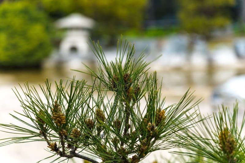 Plantas do estilo japon?s no jardim fotos de stock