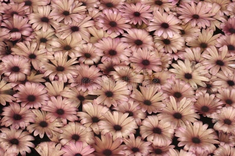 Plantas do fundo ilustração royalty free