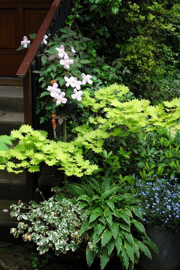 Plantas do grupo no lugar do jardim da sombra fotografia de stock