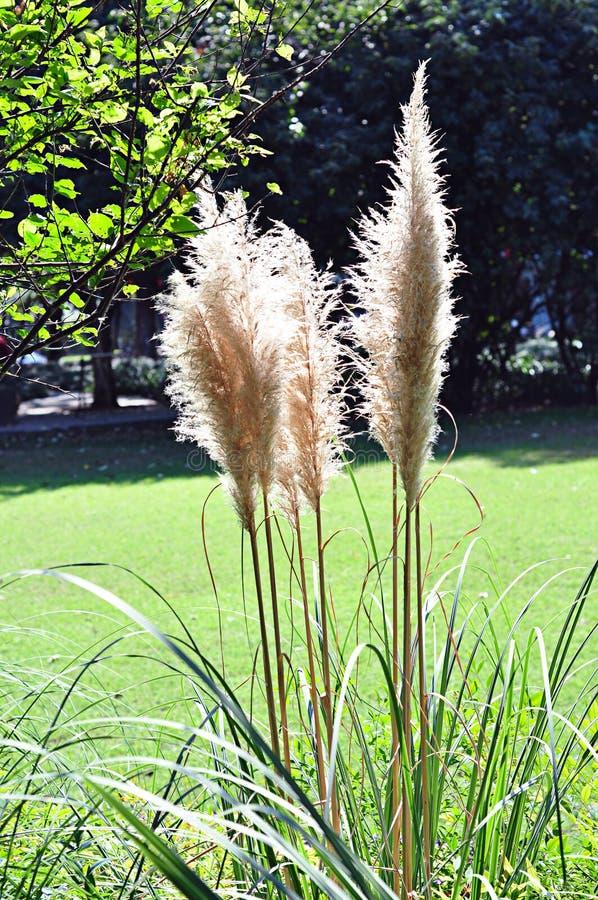 Plantas do luxuoso sob o sol fotos de stock royalty free