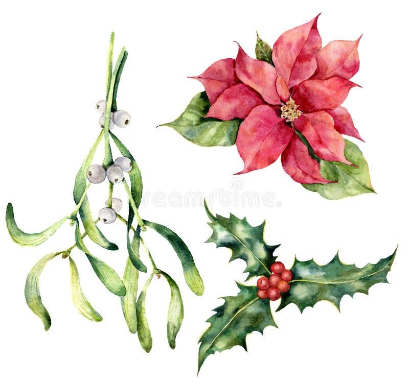 Plantas do Natal da aquarela Poinsétia pintado à mão, visco, azevinho isolado no fundo branco Símbolo do feriado ilustração do vetor
