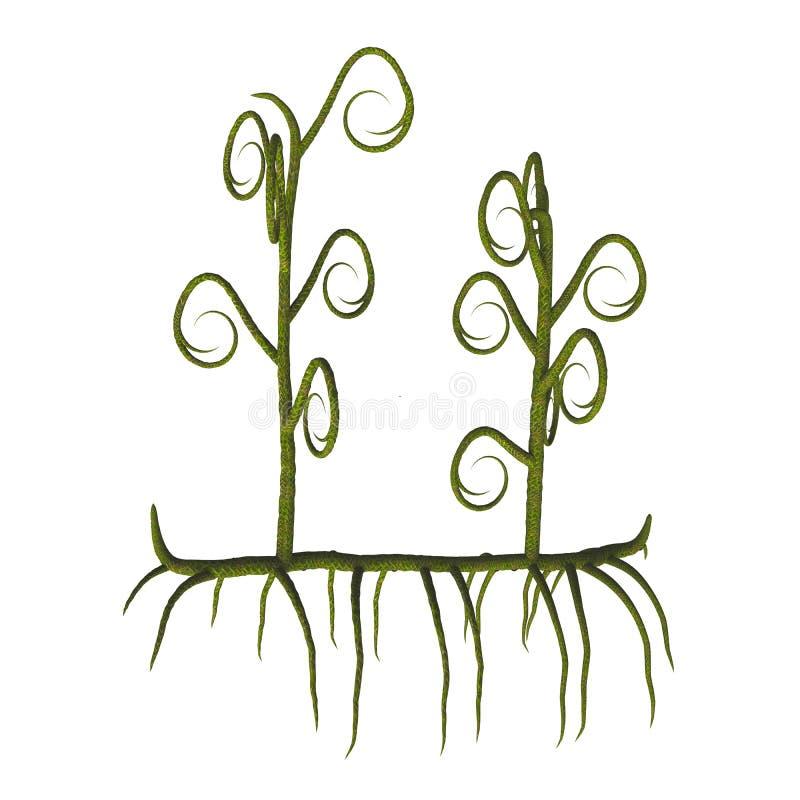 Plantas do sp de Asteroxylon