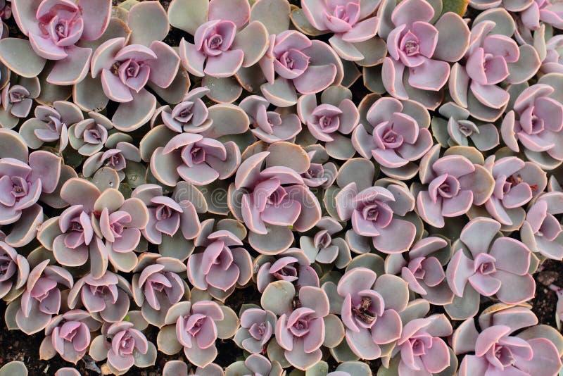 Plantas do Succulent imagens de stock royalty free
