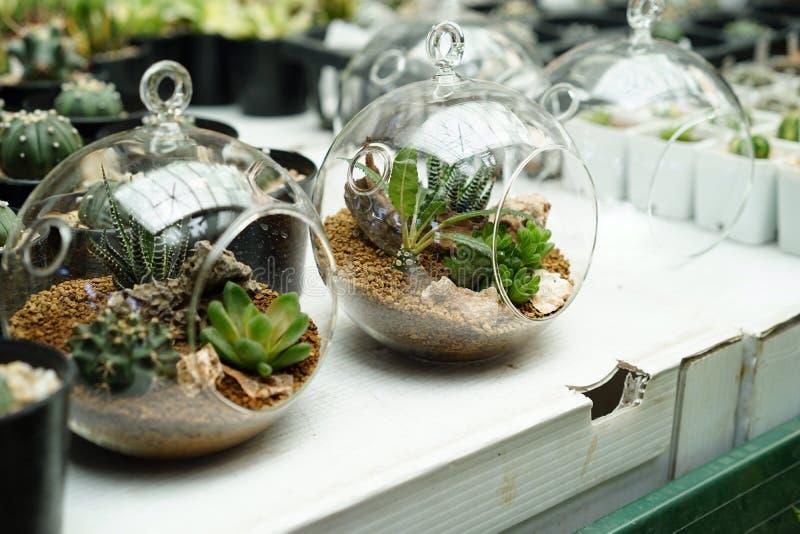 Plantas do Terrarium fotos de stock