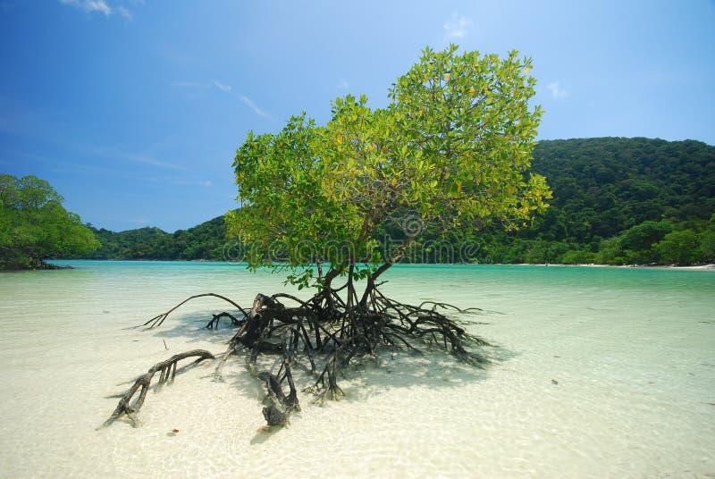 Plantas dos manguezais fotos de stock