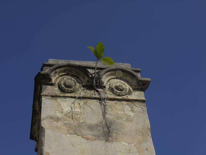 Plantas e construção velha imagem de stock royalty free