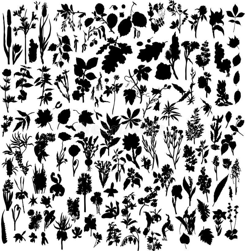 Plantas e flores ilustração stock