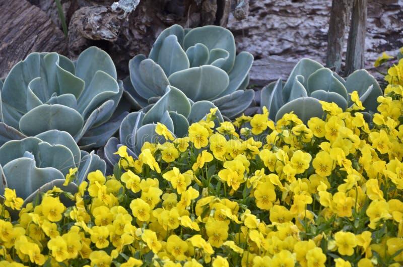 Plantas e flores amarelas imagem de stock