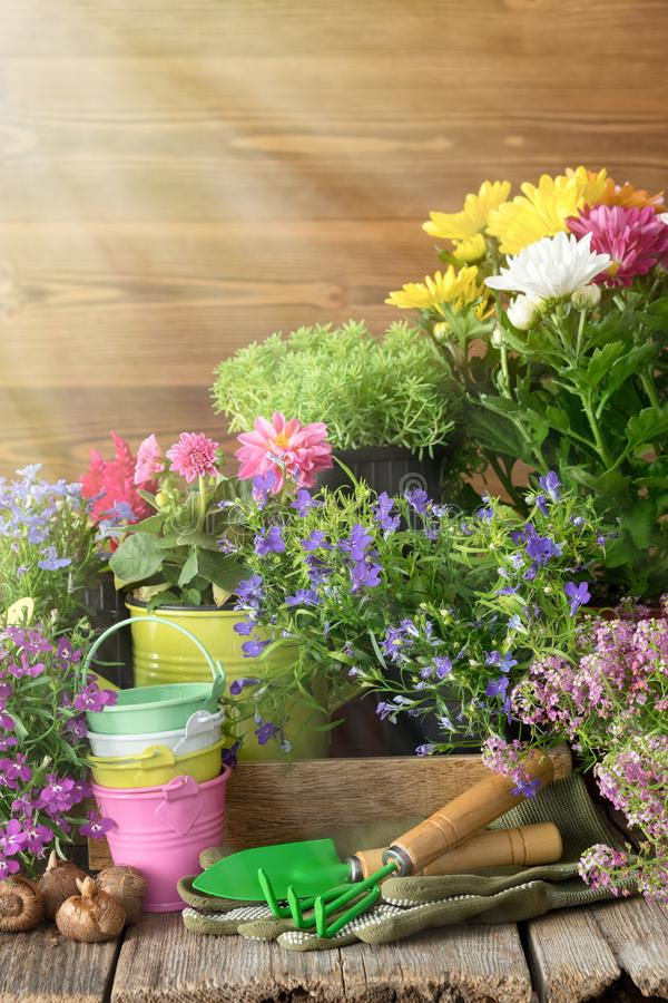 plantas e flores de jardim Lata molhando, cubetas, pá, ancinho imagens de stock