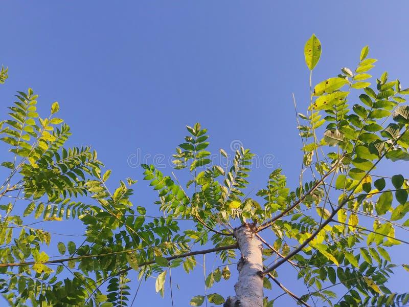Plantas e folhas imagem de stock royalty free