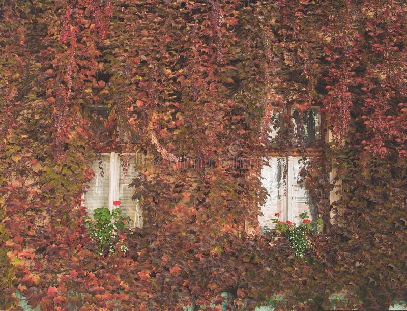 Plantas e janelas de escalada imagem de stock