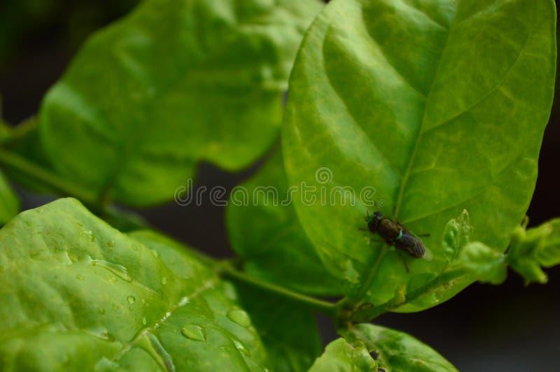 Plantas e moscas imagem de stock
