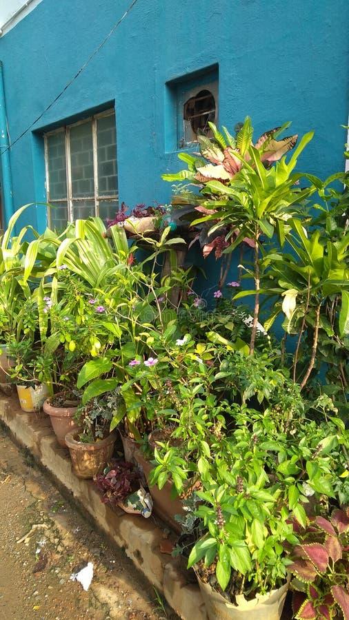 Plantas em frente à casa fotografia de stock royalty free