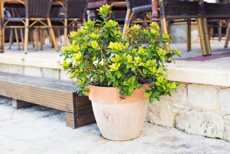 Plantas em pasta coloridas fotos de stock