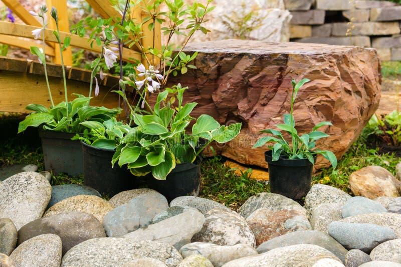 Plantas em pasta decorativas preparadas plantando na terra aberta imagem de stock