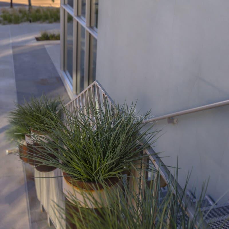 Plantas em pasta nas escadas de uma construção moderna fotografia de stock
