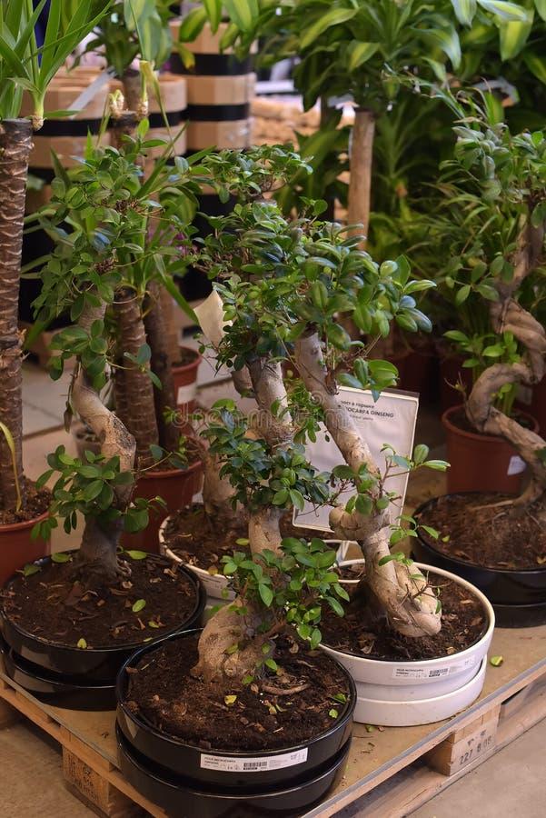 Plantas em pasta para a venda na loja de Ikea fotos de stock royalty free