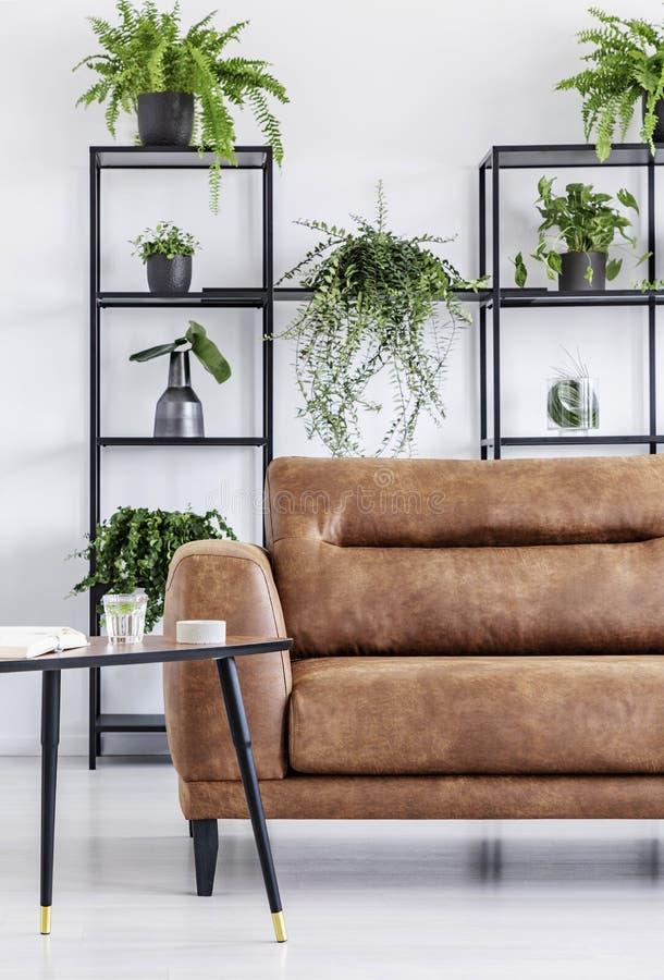Plantas em prateleiras no interior moderno branco da sala de visitas com a tabela ao lado do sofá de couro Foto real fotografia de stock royalty free