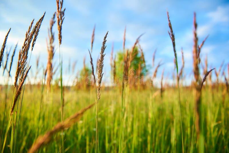 Plantas em um prado verde do verão com céu e árvores no fundo imagens de stock royalty free