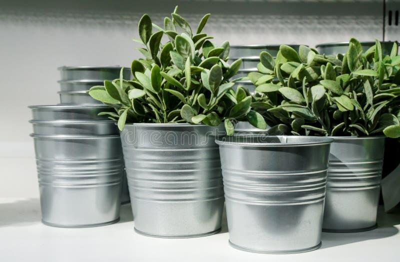 Plantas em umas cubetas do metal fotografia de stock royalty free