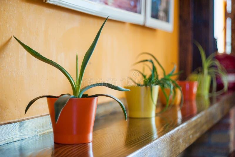 Plantas em uns potenciômetros fotografia de stock